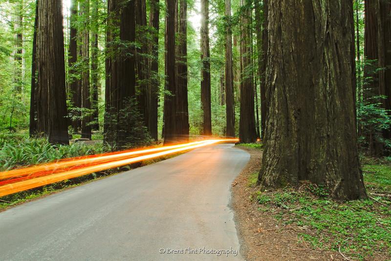 DF.2738 - long exposure car headlights through redwoods, Humboldt Redwoods State Park, CA.