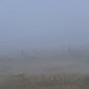 Phantoms of the Fog