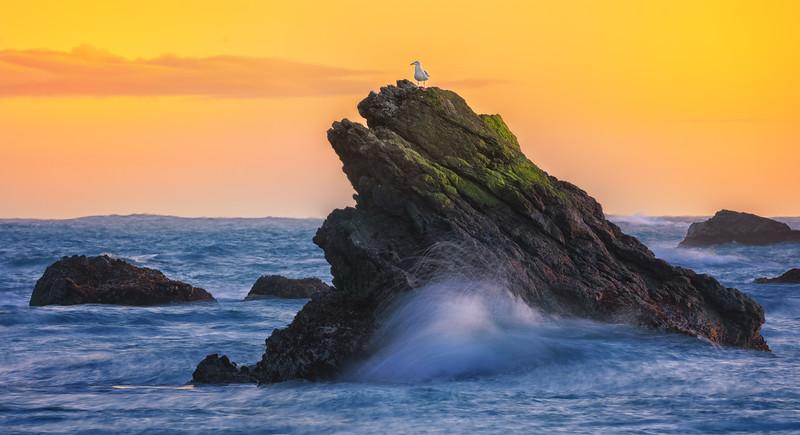 Seagull on top of coastal rocks