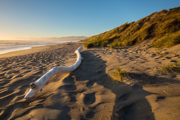 Coastal Dunes Sunset I