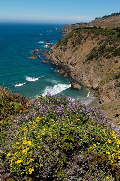 DF.2747 - wildflowers on California Coastline, Mendocino County, CA.