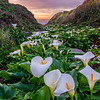 Calla Lily Valley - Big Sur, CA 2019