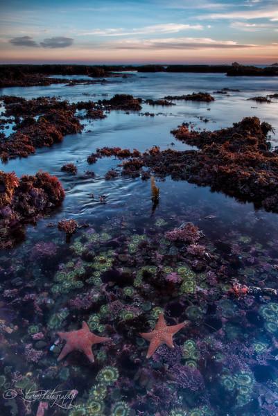 Sea Garden - Moss Beach, CA