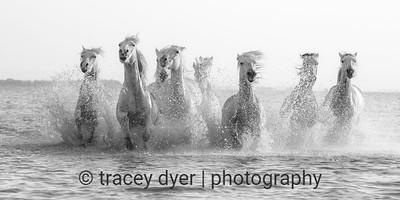 Horses of the Sea