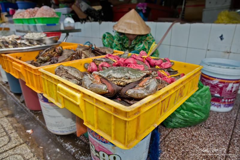 20151029-Crabs-6239