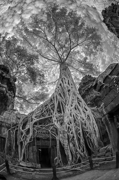 Angkor Wat and Surroundings