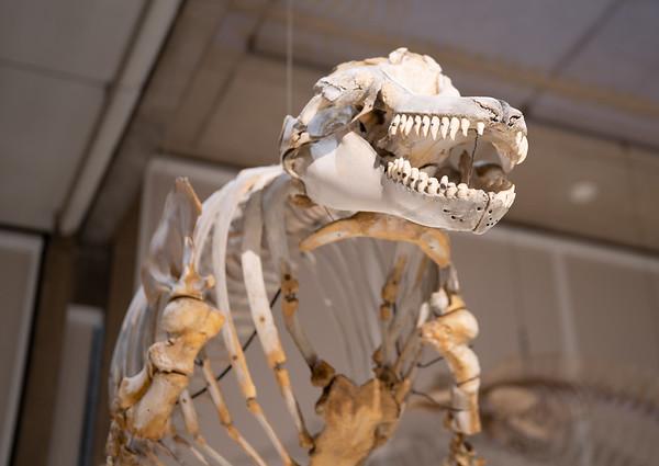 Museum of Zoology (Cambridge)