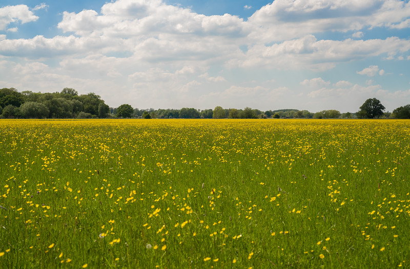 Houghton Meadows Nature Reserve