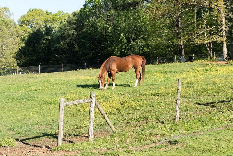 Camp Carefree is a sprawling farm with many animals