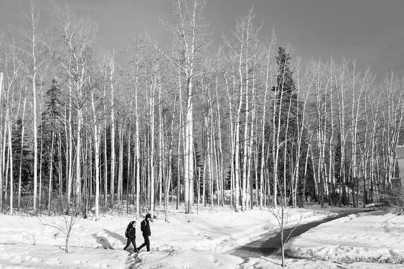 """Students walk beside Yukon Drive toward lower campus on a winter morning.  <div class=""""ss-paypal-button"""">Filename: CAM-16-4813-39.jpg</div><div class=""""ss-paypal-button-end""""></div>"""