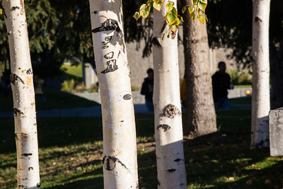 Morning light hits the birch trees on campus on a September morning.  Filename: CAM-12-3550-39.jpg