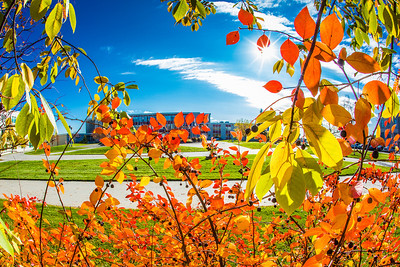 Some of the last colors of the fall linger on the Fairbanks campus on a recent afternoon.  Filename: CAM-12-3564-38.jpg