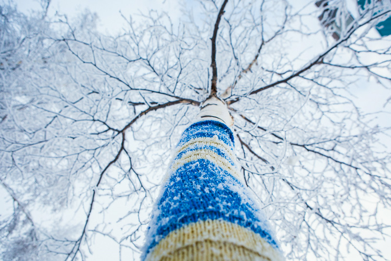 """Frost blankets the trees around campus.  <div class=""""ss-paypal-button"""">Filename: CAM-14-4062-26.jpg</div><div class=""""ss-paypal-button-end""""></div>"""