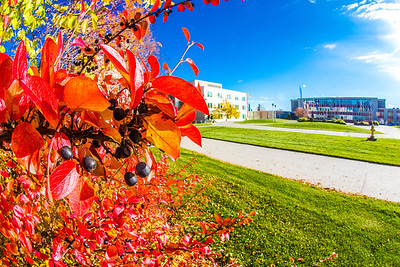 Some of the fall colors on display around campus on a September afternoon.  Filename: CAM-12-3564-27.jpg