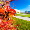 "Some of the fall colors on display around campus on a September afternoon.  <div class=""ss-paypal-button"">Filename: CAM-12-3564-27.jpg</div><div class=""ss-paypal-button-end"" style=""""></div>"