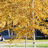 "Fall colors surround the campus on a September afternoon.  <div class=""ss-paypal-button"">Filename: CAM-12-3550-26.jpg</div><div class=""ss-paypal-button-end"" style=""""></div>"