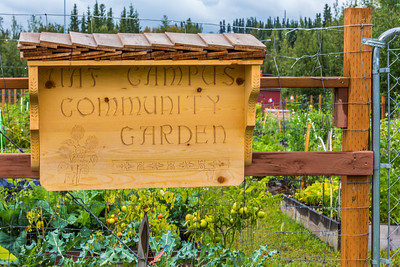 UAF's Office of Sustainability maintains a community garden for campus residents and anyone else interested in producing local vegetables.  Filename: CAM-15-4609-34.jpg