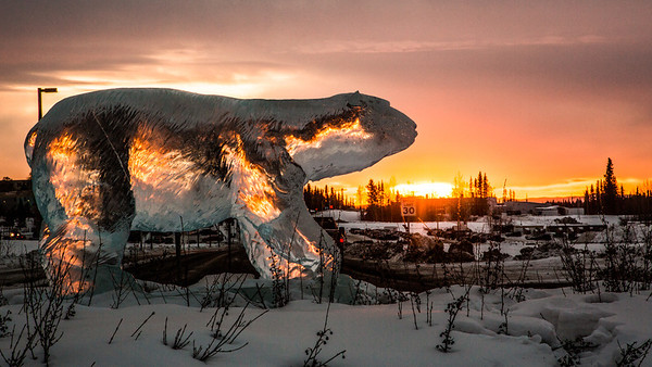 An ice sculpture of the nanook, UAF's mascot, greets campus visitors from its home in the Thompson Drive roundabout.  Filename: CAM-14-4113-2.jpg