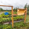 "UAF's Office of Sustainability maintains a community garden for campus residents and anyone else interested in producing local vegetables.  <div class=""ss-paypal-button"">Filename: CAM-15-4609-01.jpg</div><div class=""ss-paypal-button-end""></div>"