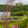 "Fireweed blossoms on the Fairbanks campus in mid-August.  <div class=""ss-paypal-button"">Filename: CAM-15-4609-28.jpg</div><div class=""ss-paypal-button-end""></div>"