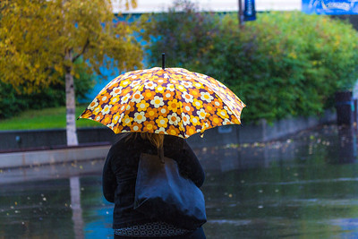 A number of consecutive rainy days brought out a variety of umbrellas on the Fairbanks campus in August 2015.  Filename: CAM-15-4627-81.jpg