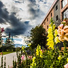 "Late-season flowers bloom in front of Lathrop Hall during Orientation Week on the Fairbanks campus at the start of the fall 2015 semester.  <div class=""ss-paypal-button"">Filename: CAM-15-4638-092.jpg</div><div class=""ss-paypal-button-end""></div>"