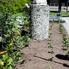 """After a late start in the season, UAF Facilities Services grounds crew plant flowers around campus, Tuesday, June 18, 2013.  <div class=""""ss-paypal-button"""">Filename: CAM-13-3864-61.jpg</div><div class=""""ss-paypal-button-end"""" style=""""""""></div>"""