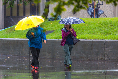 A number of consecutive rainy days brought out a variety of umbrellas on the Fairbanks campus in August 2015.  Filename: CAM-15-4627-63.jpg