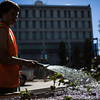 "After a late start in the season, UAF Facilities Services grounds crew plant flowers around campus, Tuesday, June 18, 2013.  <div class=""ss-paypal-button"">Filename: CAM-13-3864-71.jpg</div><div class=""ss-paypal-button-end"" style=""""></div>"