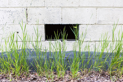 Grass grows near a building on the Fairbanks campus.  Filename: CAM-16-4917-60.jpg