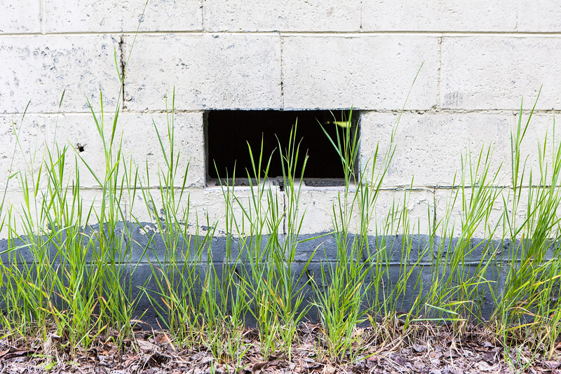 """Grass grows near a building on the Fairbanks campus.  <div class=""""ss-paypal-button"""">Filename: CAM-16-4917-60.jpg</div><div class=""""ss-paypal-button-end""""></div>"""