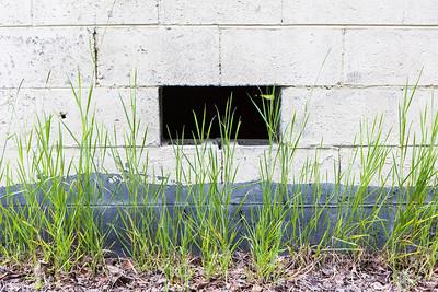 Grass grows near a building on the Fairbanks campus.  Filename: CAM-16-4917-60.jpg