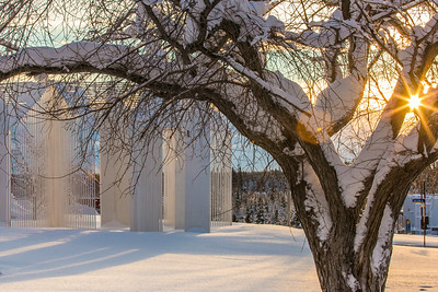 January afternoon sunshine filters through the trees on the Fairbanks campus.  Filename: CAM-14-4039-4.jpg