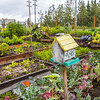 "UAF's Office of Sustainability maintains a community garden for campus residents and anyone else interested in producing local vegetables.  <div class=""ss-paypal-button"">Filename: CAM-15-4609-09.jpg</div><div class=""ss-paypal-button-end""></div>"