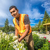 "Armando Arauz culls flowers from the bed in front of Wood Center on his morning duties with the Facilities Services summer grounds crew.  <div class=""ss-paypal-button"">Filename: CAM-12-3481-7.jpg</div><div class=""ss-paypal-button-end"" style=""""></div>"