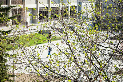 Green up is seen on campus during spring of 2014  Filename: CAM-14-4171-13.jpg