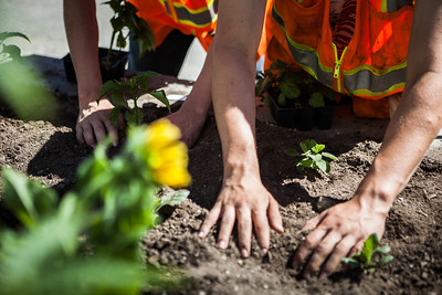 After a late start in the season, UAF Facilities Services grounds crew plant flowers around campus, Tuesday, June 18, 2013.  Filename: CAM-13-3864-26.jpg