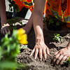 "After a late start in the season, UAF Facilities Services grounds crew plant flowers around campus, Tuesday, June 18, 2013.  <div class=""ss-paypal-button"">Filename: CAM-13-3864-26.jpg</div><div class=""ss-paypal-button-end"" style=""""></div>"