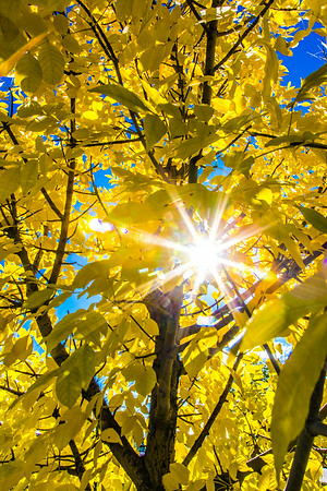 The sun shines through colorful leaves on a September day on the Fairbanks campus.  Filename: CAM-13-3938-8.jpg