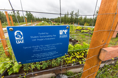 UAF's Office of Sustainability maintains a community garden for campus residents and anyone else interested in producing local vegetables.  Filename: CAM-15-4609-03.jpg