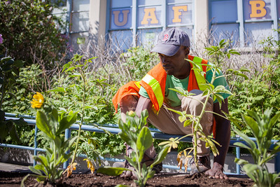 Jafar Sadic from Facilities Services grounds crew plant flowers around campus, Tuesday, June 18, 2013.  Filename: CAM-13-3864-58.jpg