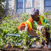 "Jafar Sadic from Facilities Services grounds crew plant flowers around campus, Tuesday, June 18, 2013.  <div class=""ss-paypal-button"">Filename: CAM-13-3864-58.jpg</div><div class=""ss-paypal-button-end"" style=""""></div>"