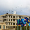 "Migrating sandhill cranes fly over the Fairbanks campus in August 2015.  <div class=""ss-paypal-button"">Filename: CAM-15-4634-029.jpg</div><div class=""ss-paypal-button-end""></div>"