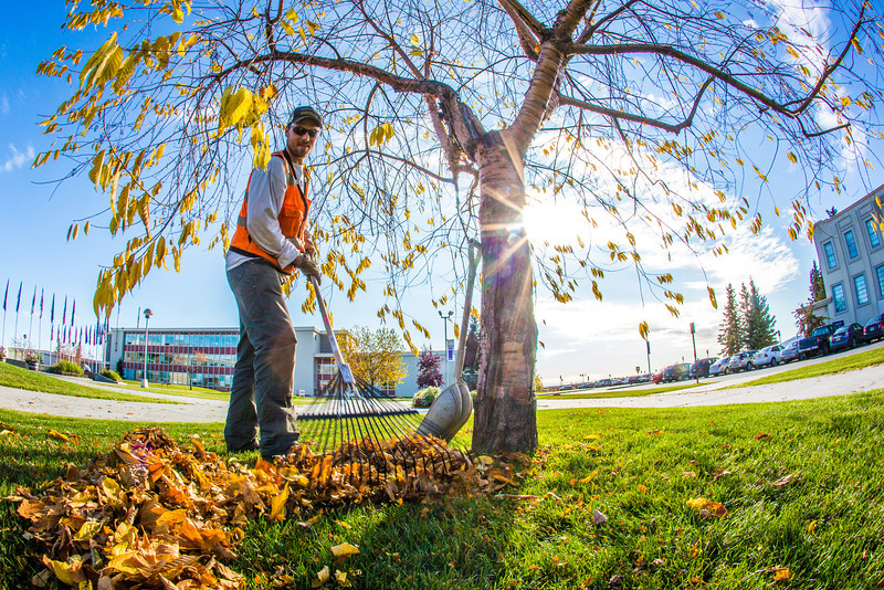 "Grounds crew supervisor Raif Kennedy rakes leaves in Cornerstone Plaza on a September afternoon.  <div class=""ss-paypal-button"">Filename: CAM-12-3564-16.jpg</div><div class=""ss-paypal-button-end"" style=""""></div>"