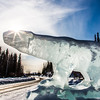 "An ice sculpture of UAF's Nanook mascot greets visitors to campus on Alumni Drive.  <div class=""ss-paypal-button"">Filename: CAM-13-3767-6.jpg</div><div class=""ss-paypal-button-end"" style=""""></div>"