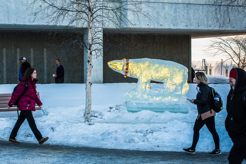 "A polar bear carved out of ice decorates campus.  <div class=""ss-paypal-button"">Filename: CAM-16-4794-7.jpg</div><div class=""ss-paypal-button-end""></div>"