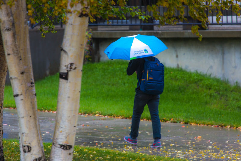 "A number of consecutive rainy days brought out a variety of umbrellas on the Fairbanks campus in August 2015.  <div class=""ss-paypal-button"">Filename: CAM-15-4627-22.jpg</div><div class=""ss-paypal-button-end""></div>"