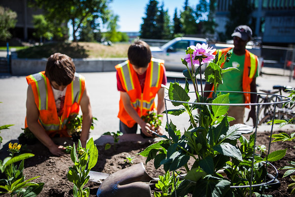 """After a late start in the season, UAF Facilities Services grounds crew plant flowers around campus, Tuesday, June 18, 2013.  <div class=""""ss-paypal-button"""">Filename: CAM-13-3864-20.jpg</div><div class=""""ss-paypal-button-end"""" style=""""""""></div>"""