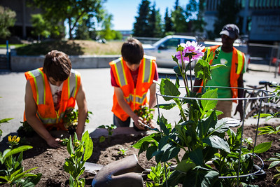 After a late start in the season, UAF Facilities Services grounds crew plant flowers around campus, Tuesday, June 18, 2013.  Filename: CAM-13-3864-20.jpg