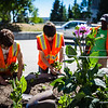 "After a late start in the season, UAF Facilities Services grounds crew plant flowers around campus, Tuesday, June 18, 2013.  <div class=""ss-paypal-button"">Filename: CAM-13-3864-20.jpg</div><div class=""ss-paypal-button-end"" style=""""></div>"
